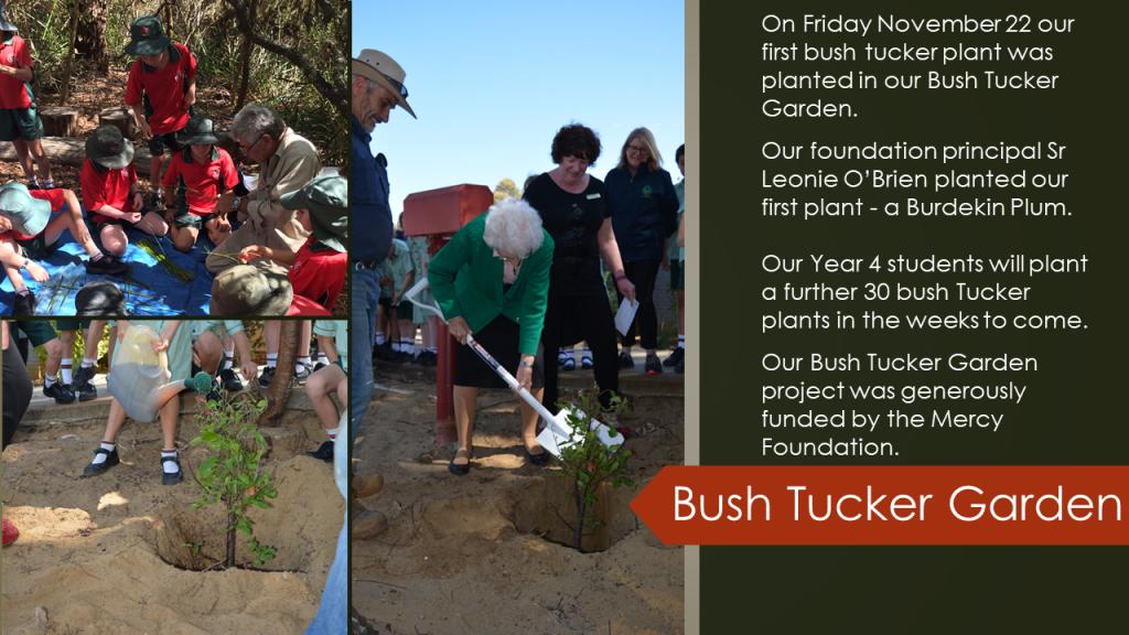Bush Tucker Garden