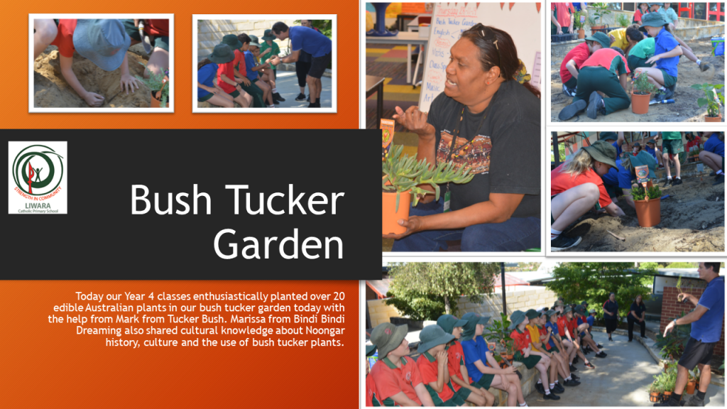 Bush Tucker Garden Planting