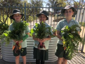 Green Team Harvest2